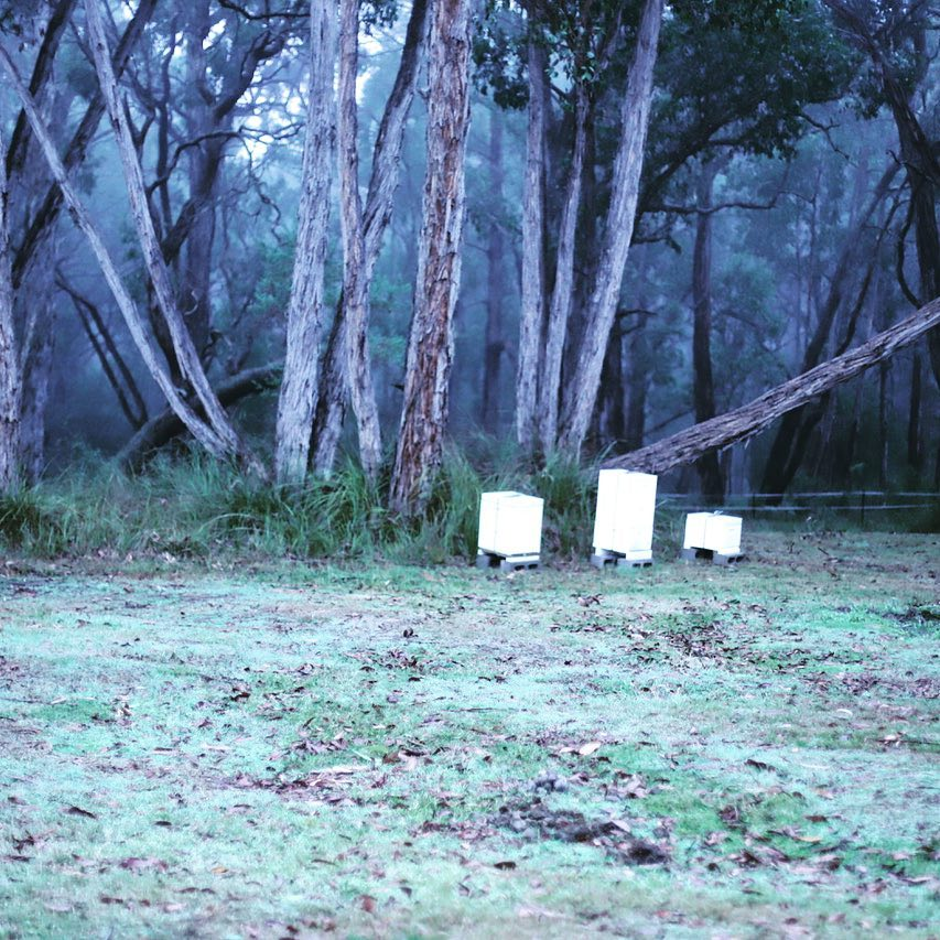 Apiary Made hives in winter