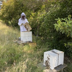 beekeeping in healesville
